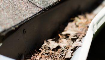 Dead leaves in a gutter.